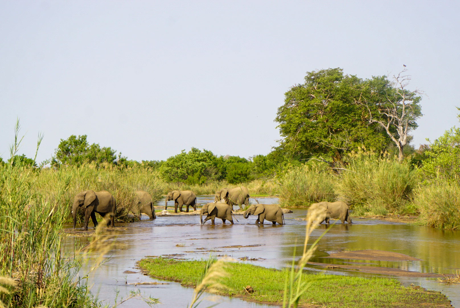 Eine Elefantenherde beim Trinken am Sabie Fluss